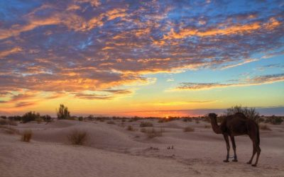 Dezember 2018 – Wüstenerfahrung Camel Trekking