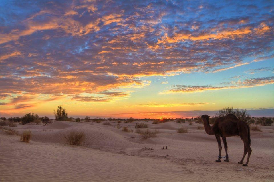 Camel Trekking in Tunesien