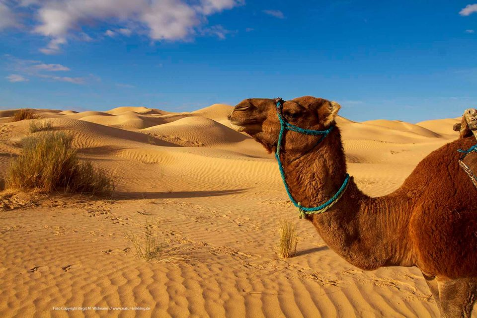 Sahara Seminar in Tunesien